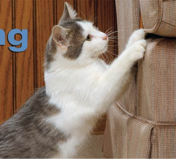 How to Stop a Cat from Scratching Furniture - Pets Cute ...