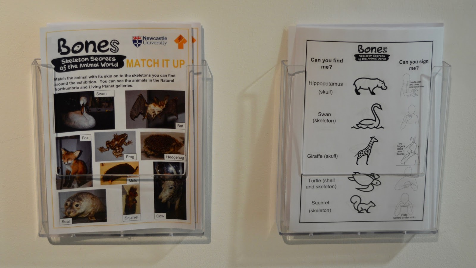 Bones Exhibition at Hancock Museum, Newcastle - activity sheets