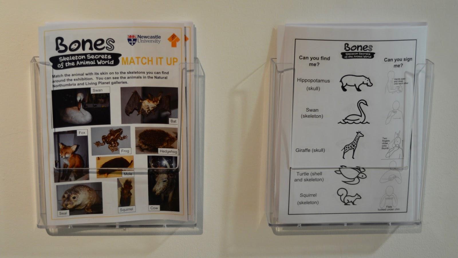 Bones Exhibition at Hancock Museum, Newcastle - activity sheets