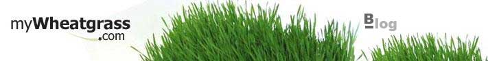 Wheatgrass Blog - How to Grow Wheatgrass and Benefits and Uses of Wheatgrass