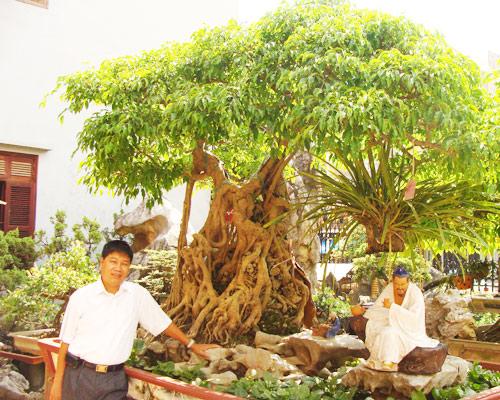 Cây của đại gia Toàn quê ở Việt Trì với siêu phẩm cây Ông Bụt