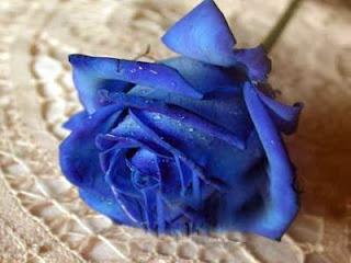 Kék rózsa jellentése
