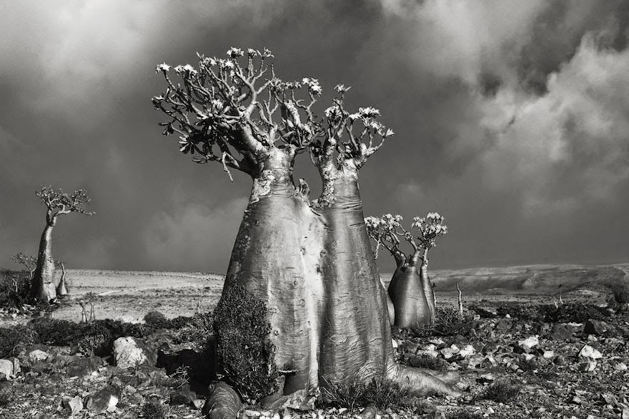This Woman Has Spent The Last 14 Years Photographing The World's Oldest Trees