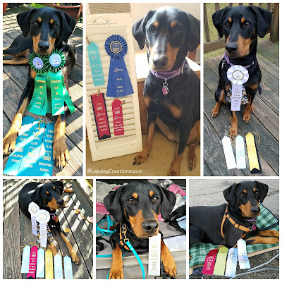 doberman scent work nose dog sports canine ribbons rescue