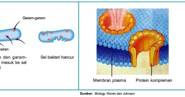 Mekanisme Sintesis Protein dalam sel