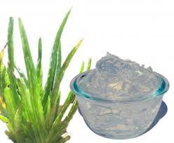 aloe vera gel for hair benefits in urdu