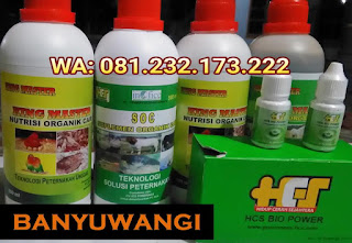 Jual SOC HCS, KINGMASTER, BIOPOWER Siap Kirim Banyuwangi