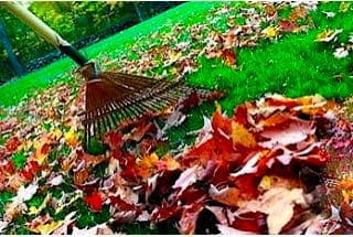 Leafs bing raked during the fall.