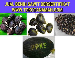 jual-benih-sawit-ppks-239.jpg