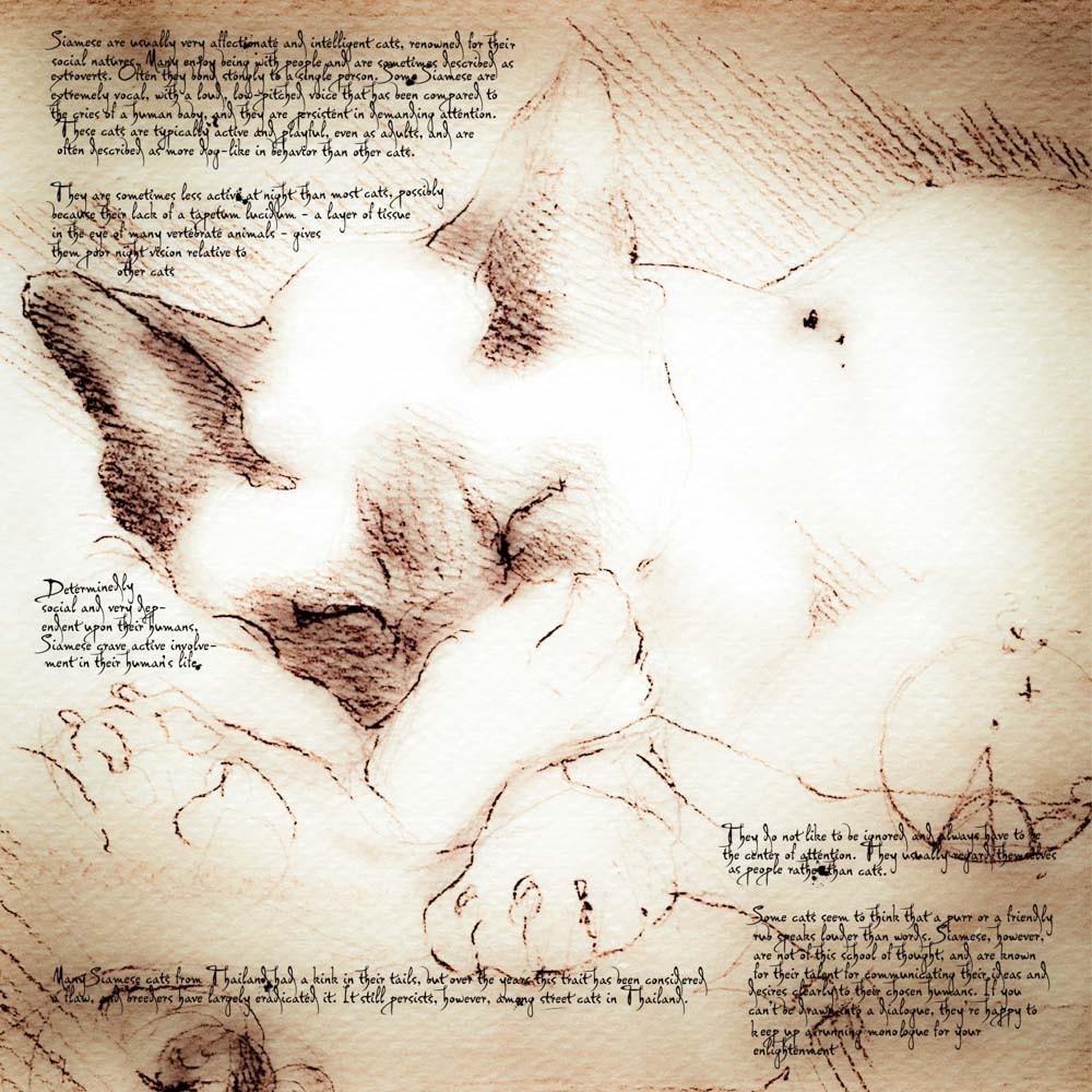 16-Siamese-Sleeping-Leonardo-s-Dogs-Cats-and-Dogs-Drawn-in-the-style-of-Leonardo-da-Vinci