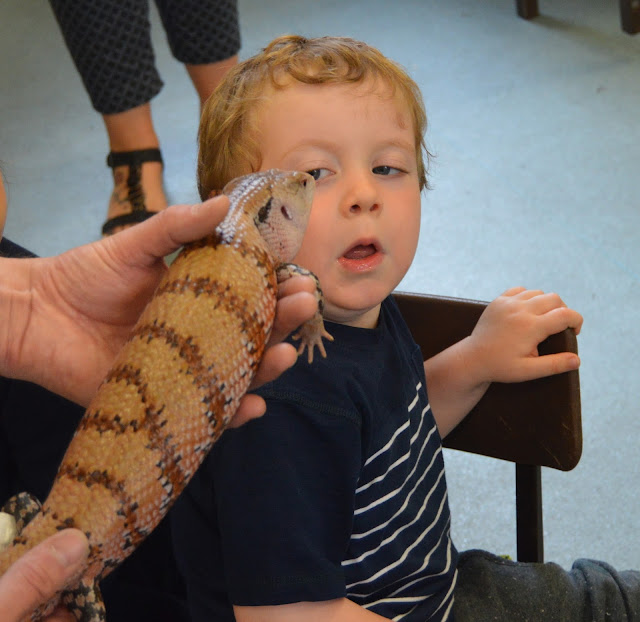 a blue tongue skink by a boys face