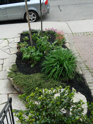 New front garden perennial bed in Wychwood after by Paul Jung Gardening Services--a Toronto Gardening Company