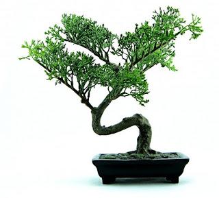 teknik jitu dan mudah menanam bonsai