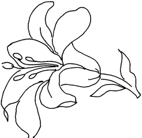 Pictures Of Flowers Hand Drawn