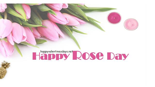 pink-rose-wallpaper