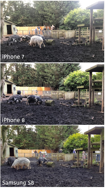 3 images of a very muddy pig enclosure