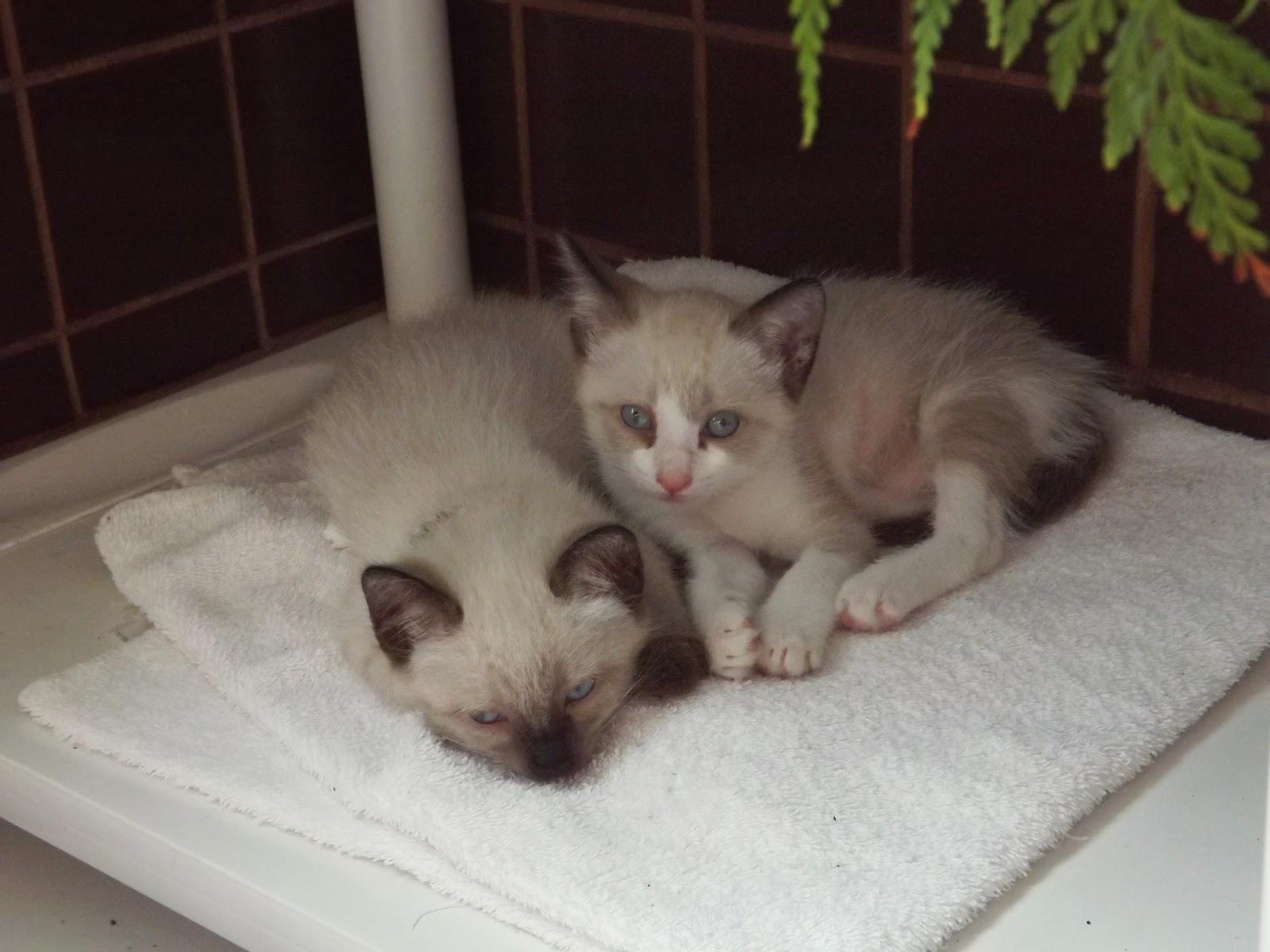 Blog Dá um Zoom adoção de gatos