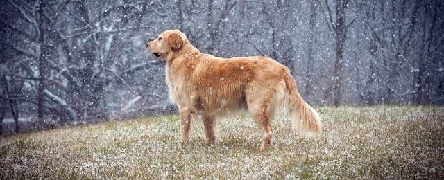 Animales, adaptacion al frio y biologia