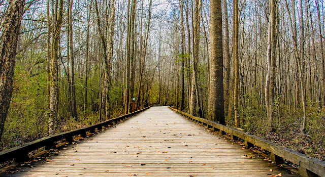 Bridge Between Brown Wooden  Lifeless Tree During Day Time
