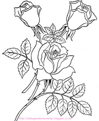 gambar bunga mawar - 13