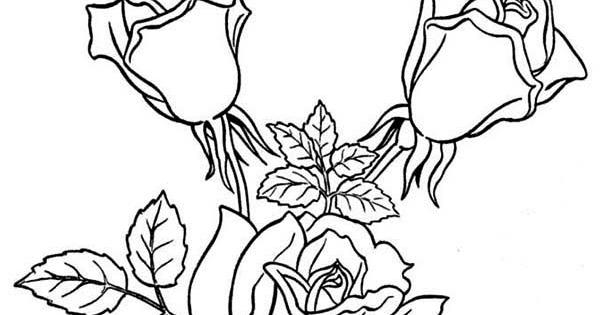 15 Gambar Mewarnai Bunga Mawar Untuk Anak PAUD dan TK - Gambar Bunga Mawar 8df6f0a8c9