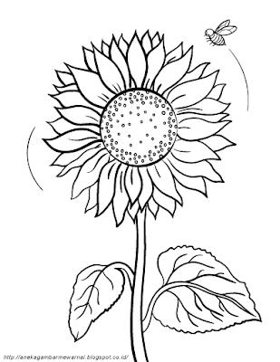 Gambar Mewarnai Bunga Matahari (1)
