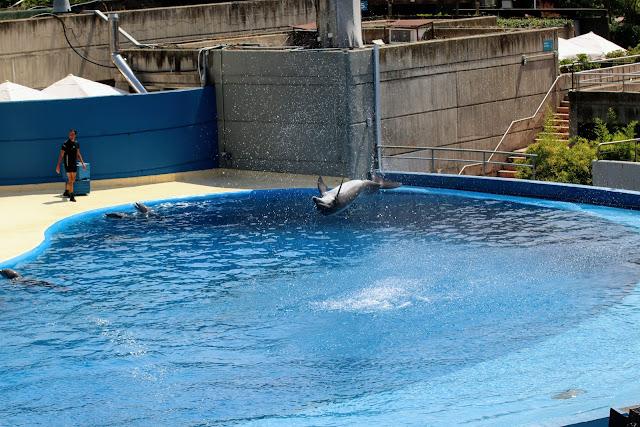 מופע דולפינים