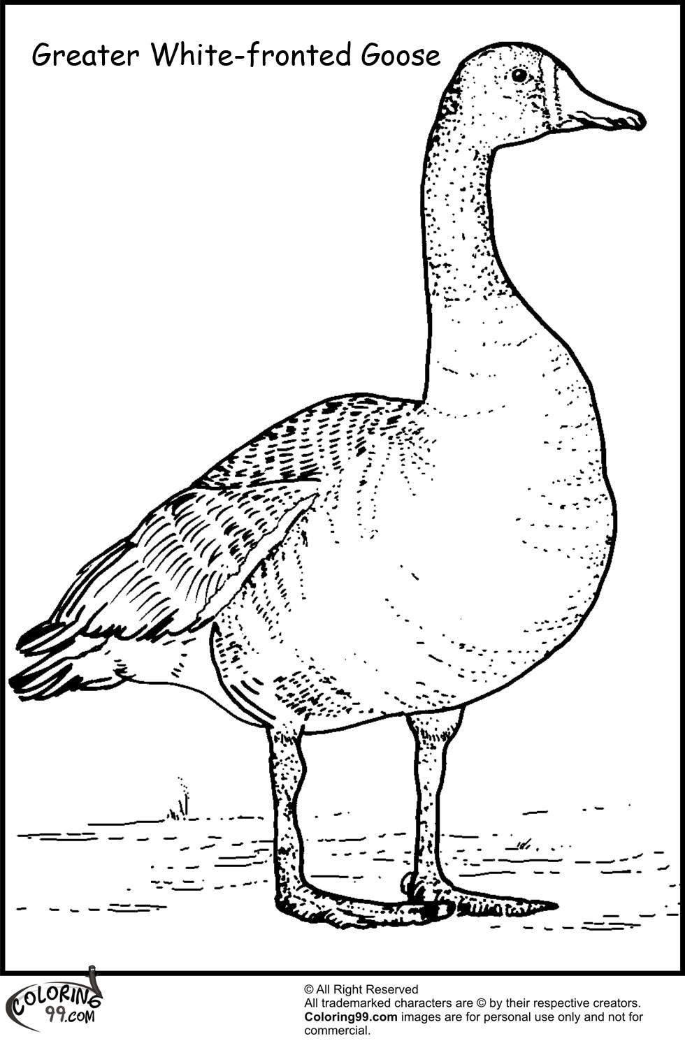 Goose Coloring Pages Team colors