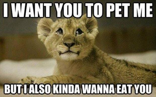 30 Funny animal captions - part 14 (30 pics), funny captioned pictures, funny animals with captions, photos with funny captions