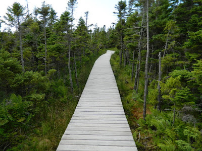 Skyline Trail boarded path Cape Breton Highlands National Park Nova Scotia by garden muses-not another Toronto gardening blog