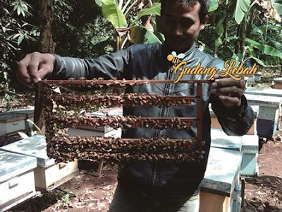royal ejlly, royal jelly palembang, jual royal jelly dipalembang, tempat beli royal jelly dipalembang, toko penjual royal jelly dipalembang, manfaat royal jelly, suplier royal jelly dipalembang, program hamil, toko herbal palembang