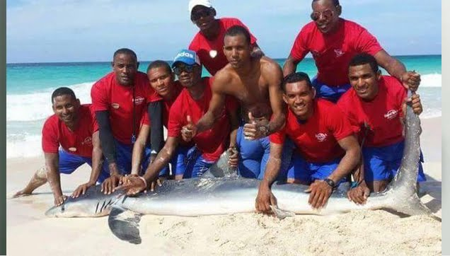 Shark dies after being dragged out of the ocean for 'selfie'