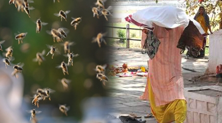 DHAR: बंदर से नाराज मधुमक्खियों ने 16 श्रद्धालुओं को घायल किया | MP NEWS