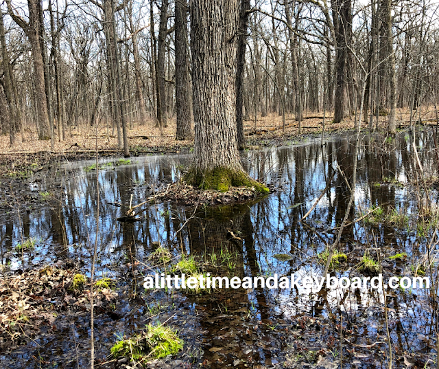 Water and forest meld together at Old School Forest Preserve in Mettawa, Illinois