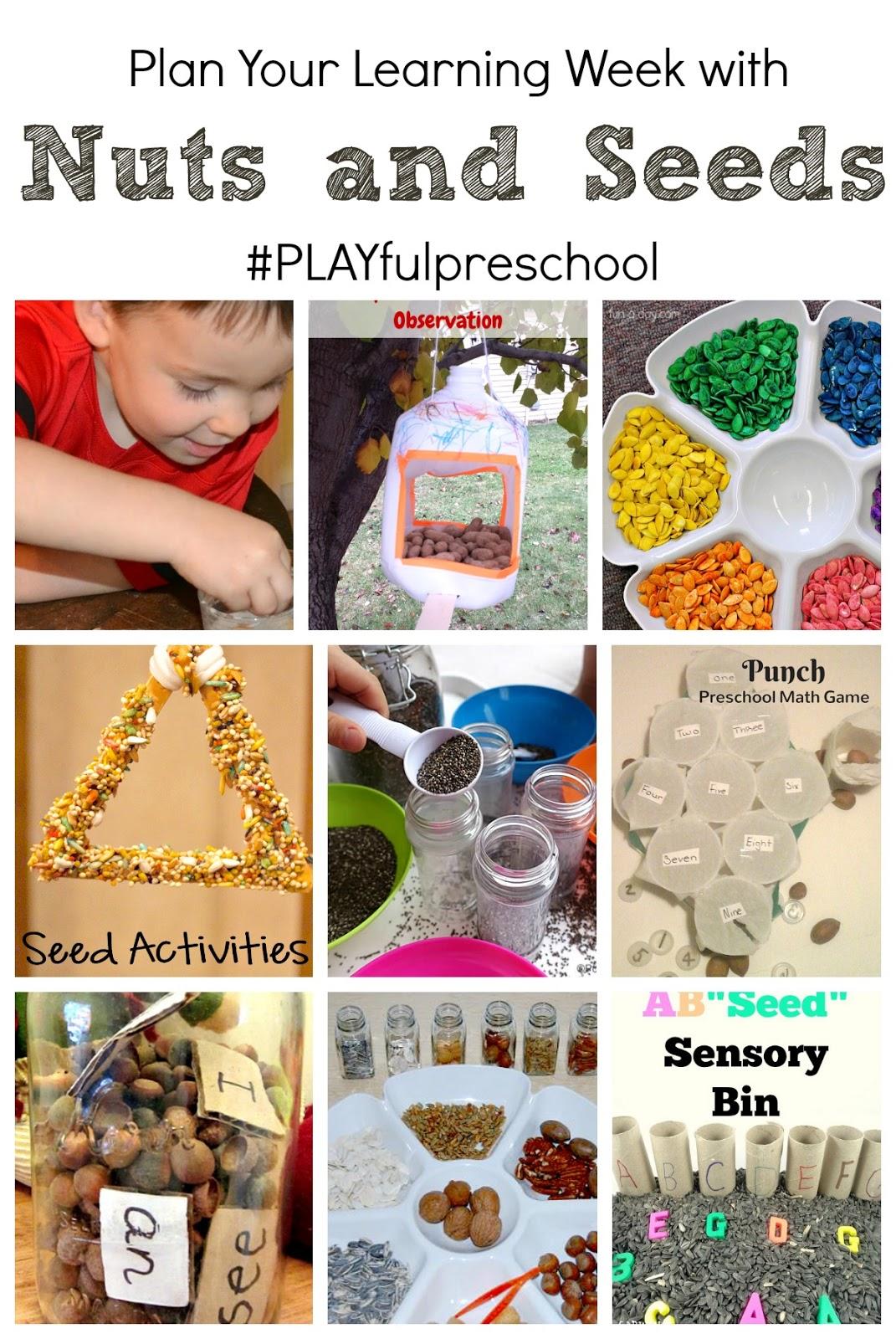 3 Fun Activities With Seeds For Preschoolers