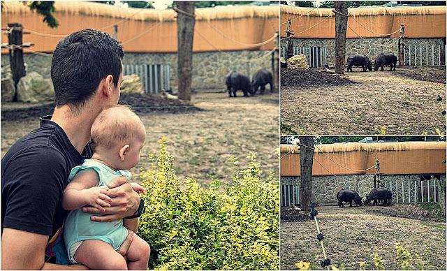 Kolaż zdjęć [Weronika, Marcin i nosorożce]