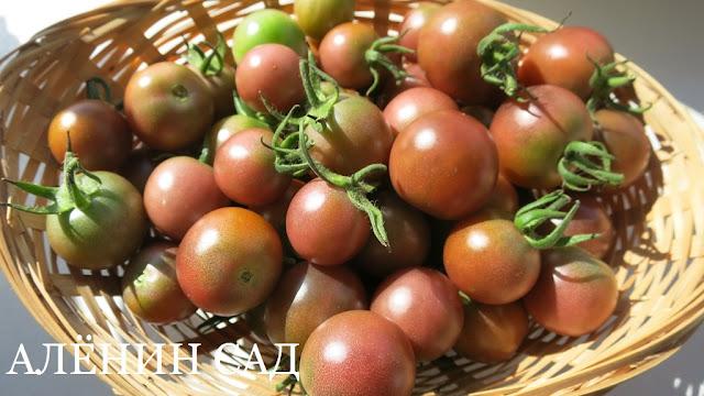 Вишня черная, томаты, помидоры, сорта томатов, черные томаты, аленин сад