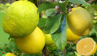 Lemon, lemon fruit,লেবু
