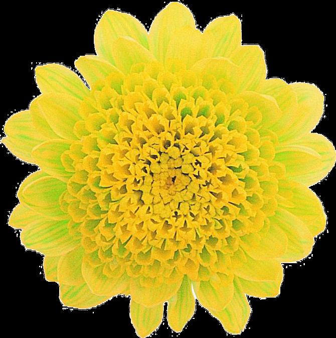 Extraordinaria Coleccion De Flores En Png Sin Fondo