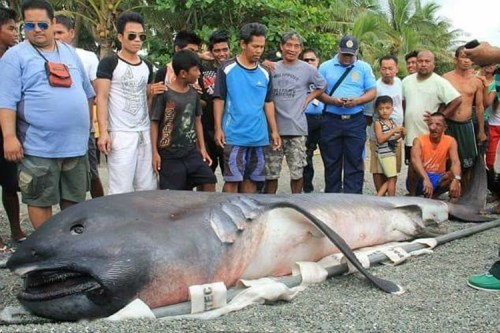 SHOCKING! Another Strange Deep-Sea Fish Was Found Along the Coast of Cebu!