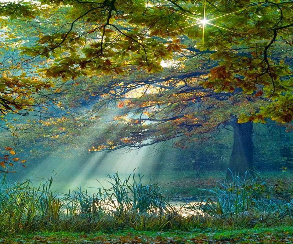 Raios de sol no Bosque