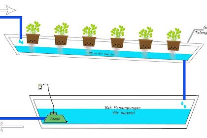 Cara Menanam Hidroponik Dengan Sistem  NFT dan Wick Sistem