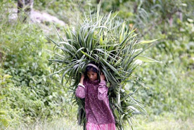 Darjeeling hill economy, women carrying grass in village