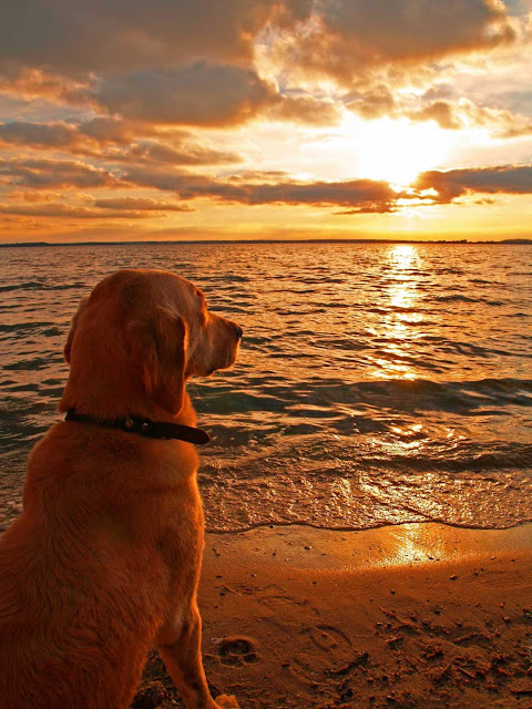 He sat there peacefully watching the sunset, then turned to me as if to say it's time to go home.