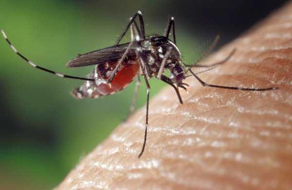 Mengatasi Gatal Akibat Gigitan Nyamuk
