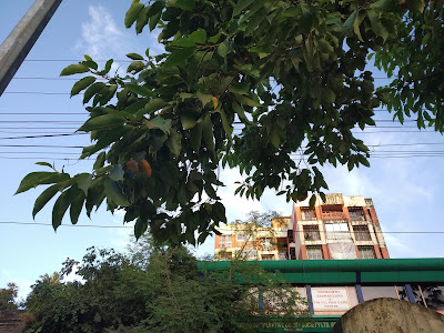 Xiaomi Redmi 6 Pro Camera Samples