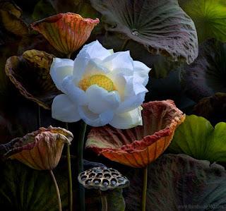Rác và Hoa