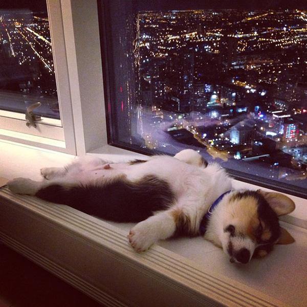 22 minh chứng cho thấy chó con là lũ ham ngủ vô cùng tận