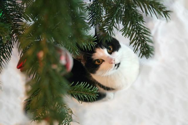 Kat fijne Kerstdagen kerstboom