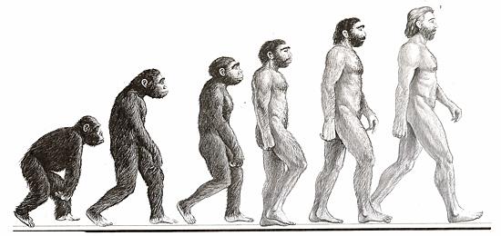 6 curiosidades sobre os pelos - Evolução do Homem